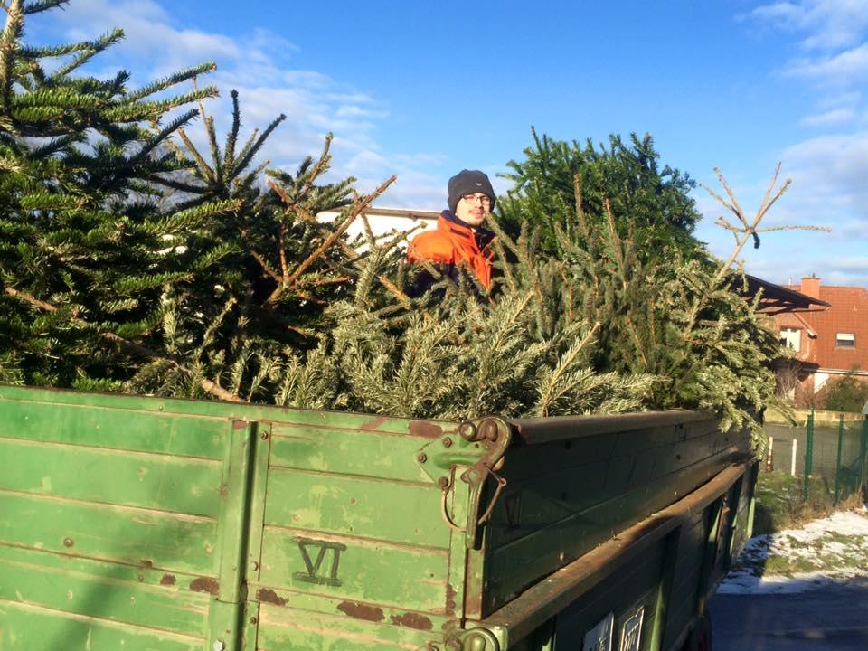Sammlung der Weihnachtsbäume 2016